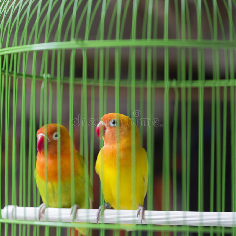 Colorful birds for sale at the bird market in Yogyakarta, Java, Indonesia. Colorful birds for sale at the bird market in Yogyakarta, Java, Indonesia royalty free stock photos
