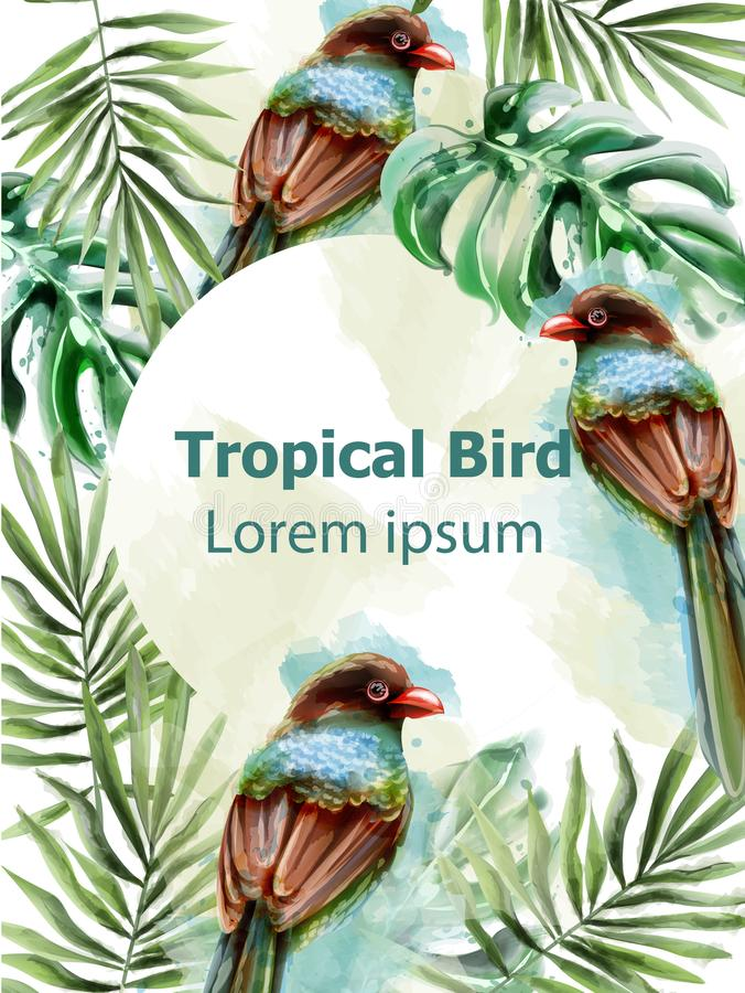 Colorful birds tropic card watercolor Vector with palm leaves decor. Exotic design summer layouts. Colorful birds tropic card watercolor Vector with palm leaves royalty free illustration