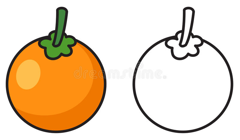 Colorful and black and white oranges for coloring book. Illustration of isolated colorful and black and white oranges for coloring book vector illustration