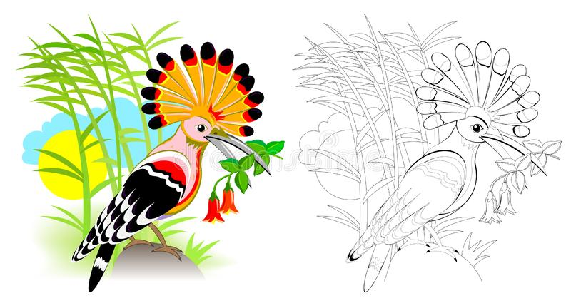 Colorful and black and white page for coloring book for kids. Fantasy illustration of cute hoopoe with bright feathering. stock illustration