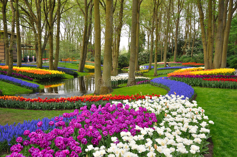 Colorful blossing tulips in Keukenhof park stock photography