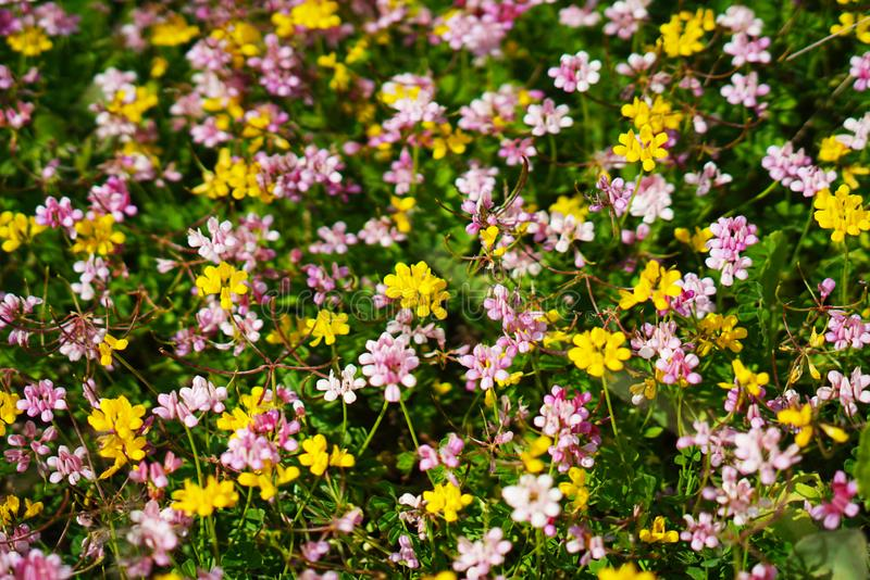 The blossoming flowers in the nature. The colorful  blossoming spring flowers in the nature stock photos