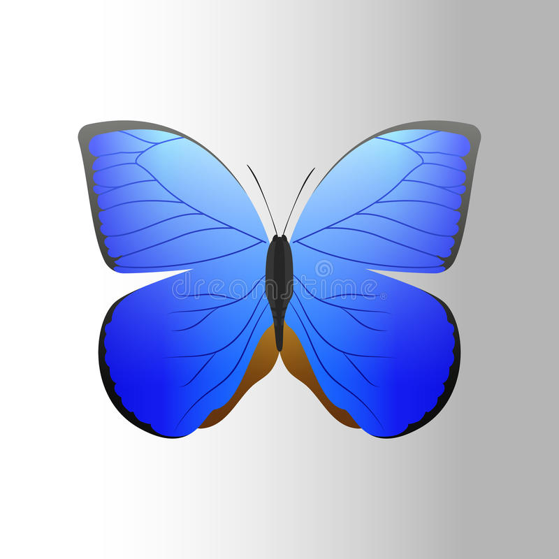 Colorful blue butterfly with abstract decorative pattern summer free fly present silhouette and beauty nature spring vector illustration
