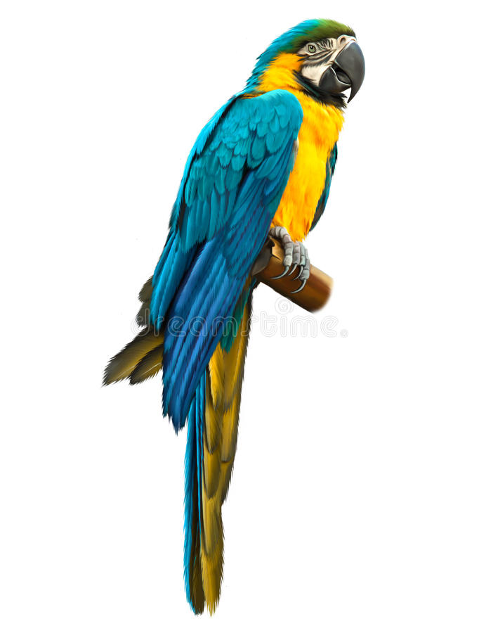 Colorful blue parrot macaw vector illustration