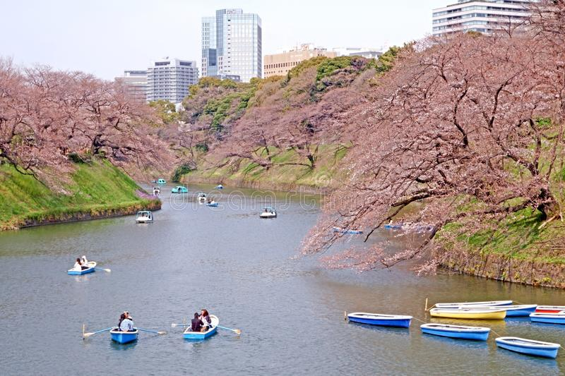 Colorful boats on Japan Tokyo river near the natural outdoor park stock photo