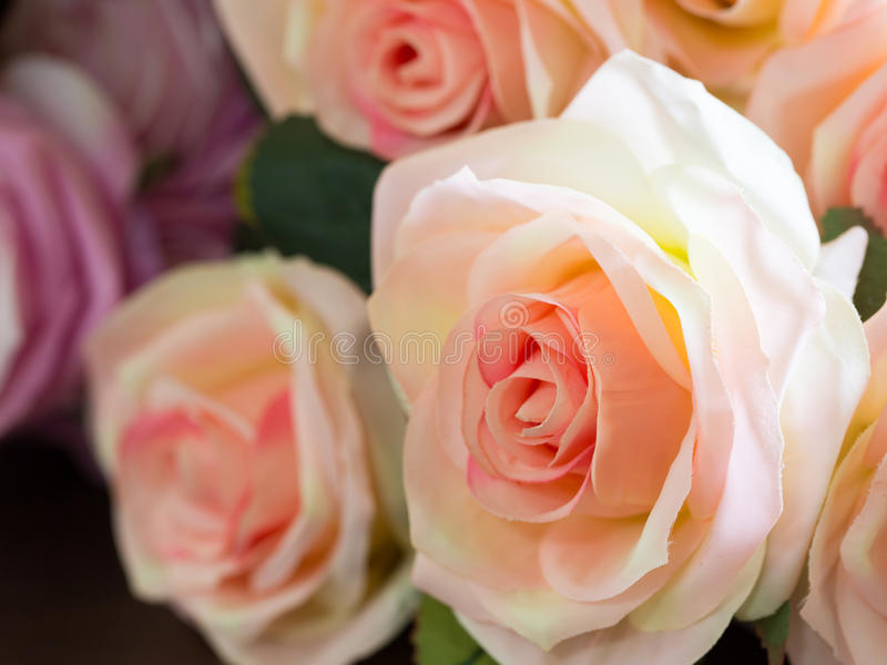 Colorful bouqet of roses use for background. Colorful bouqet of roses for background stock images