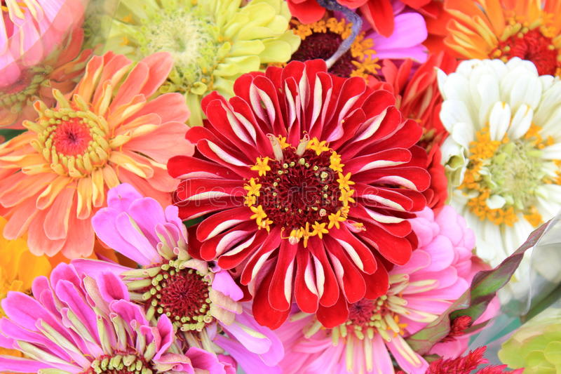 Download Colorful Bouquet Of Homegrown Flowers Stock Image - Image: 25742229