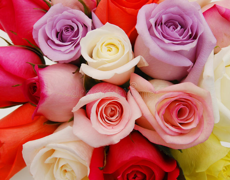 Colorful bouquet roses stock photos
