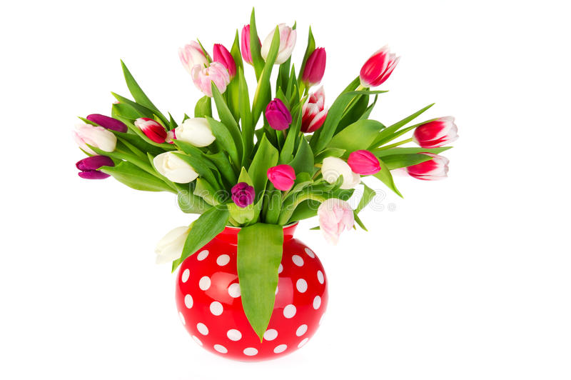 Download Colorful bouquet tulips stock photo. Image of isolated - 18567742