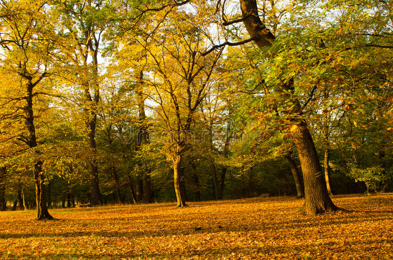 Colorful and bright autumn forest lanscape royalty free stock photos