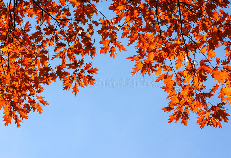 Colorful And Bright Autumn Leaves And Blue Sky Background. Fall Leaves And  Clear Blue Sky Background Perfect For Cards And Quote