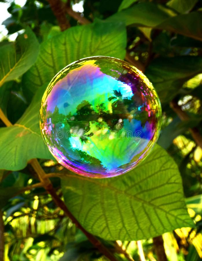 Colorful bubble like flower stock photos