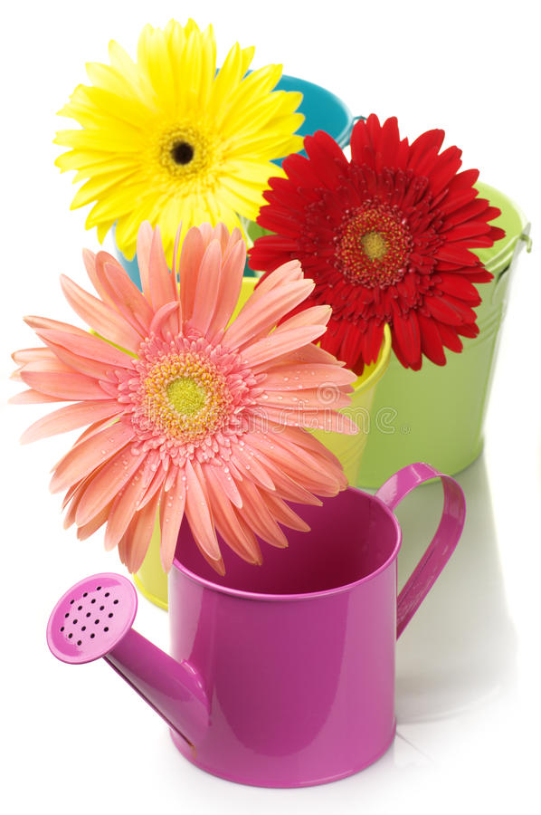 Free Colorful Buckets, Watering Can And Gerberas Stock Photography - 15012732