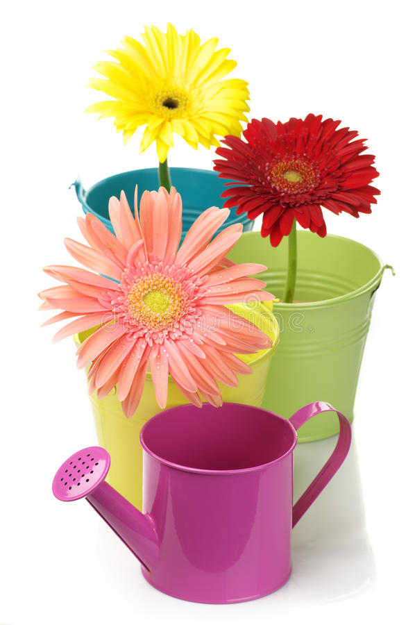 Free Colorful Buckets, Watering Can And Gerberas Stock Photo - 17208200
