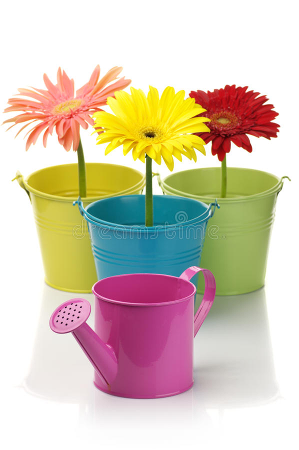 Free Colorful Buckets, Watering Can And Gerberas Stock Photography - 18103302