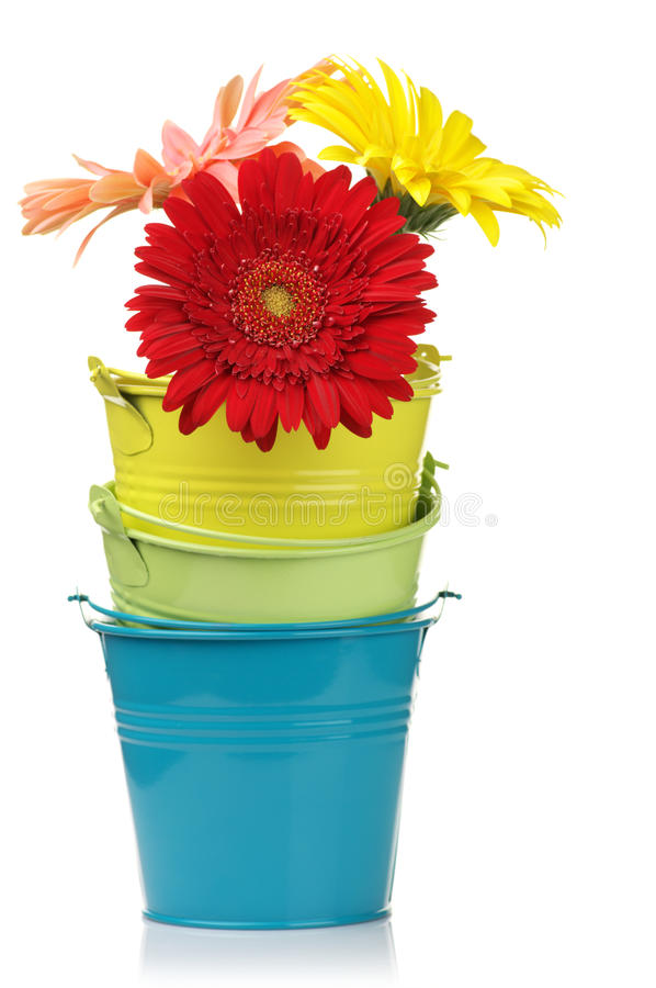 Free Colorful Buckets With Gerberas Stock Images - 16335384