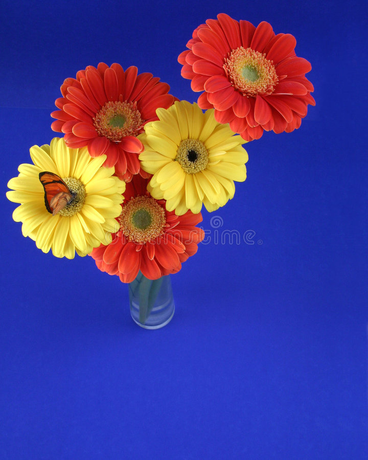 Colorful Bunch stock images