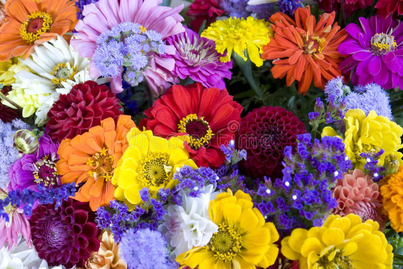 Colorful bunch of flowers royalty free stock photography