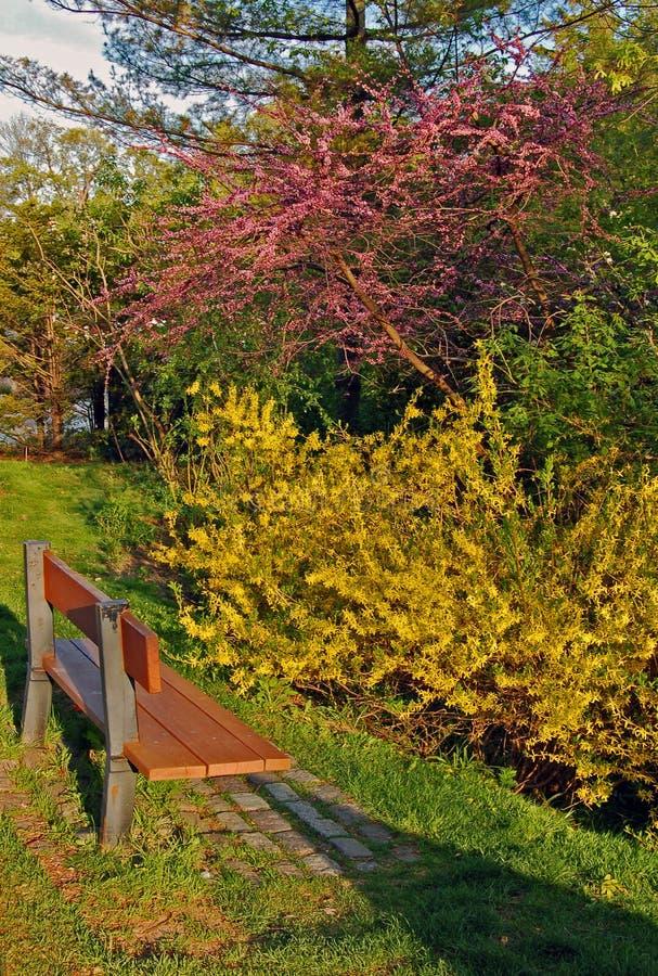 Colorful bushes stock photo