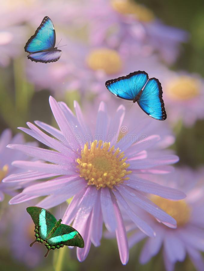 Colorful Butterflies Over A White Background Stock Image