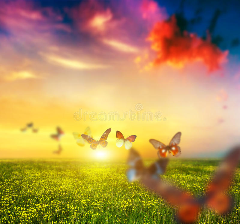 Colorful butterflies flying over spring meadow with flowers stock images