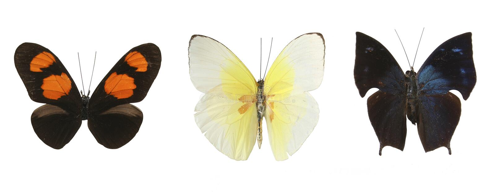 Colorful butterflies over a white background royalty free stock photography