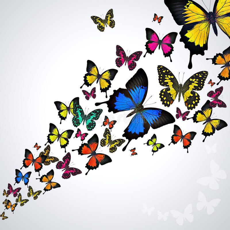 Colorful butterflies stock image. Image of adorable, collection ...