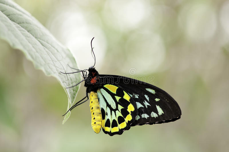 Colorful butterfly stock images