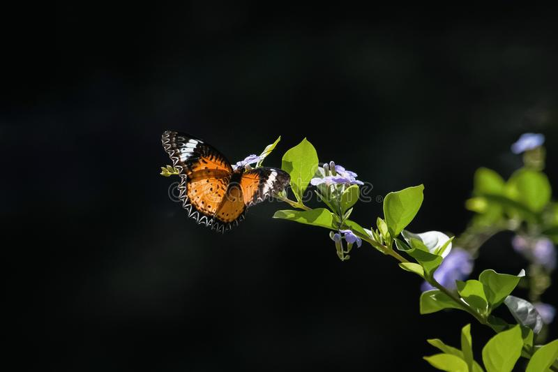 Colorful Butterfly hanging on flowers stock images