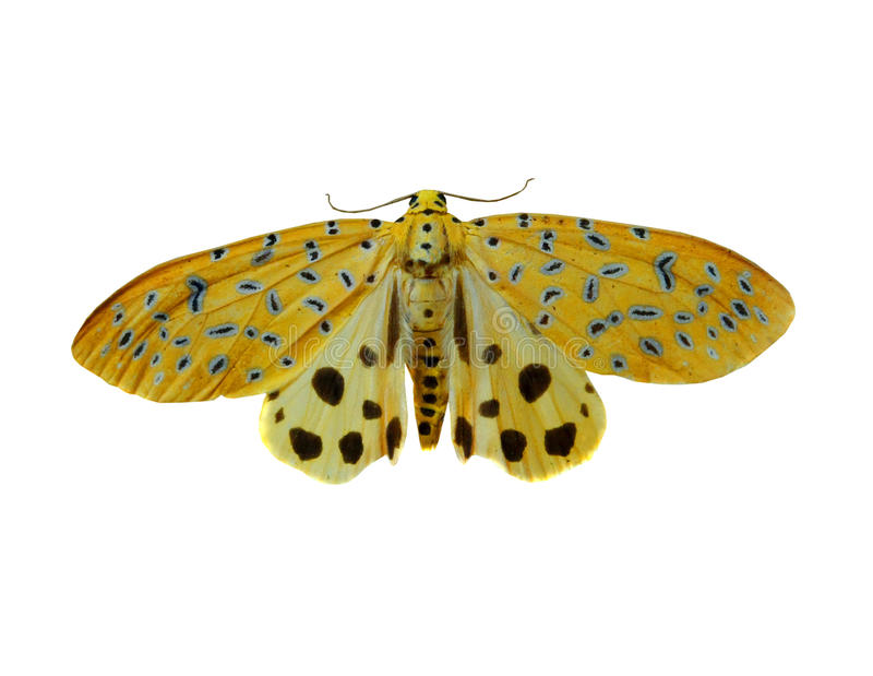 Colorful butterfly isolated on white royalty free stock photos