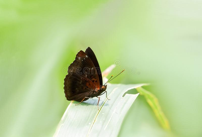 A colorful butterfly standing on a leaf royalty free stock image