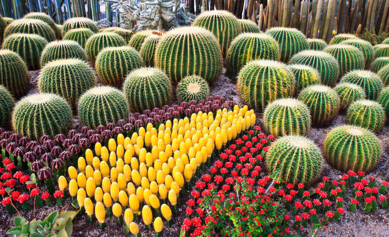 Download Colorful Cactus stock photo. Image of prickly, spiky - 21979036