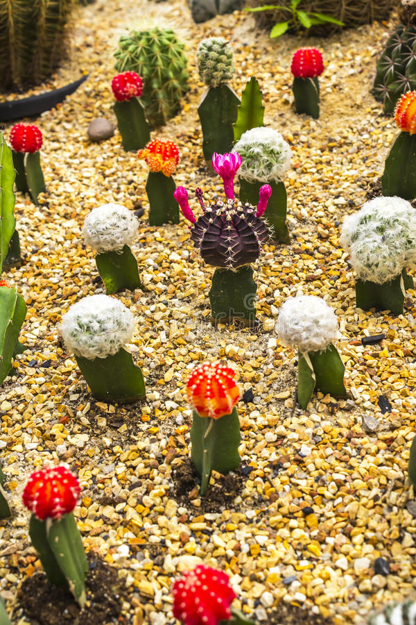 Download Colorful cactus stock photo. Image of shape, desert, closeup - 39508220