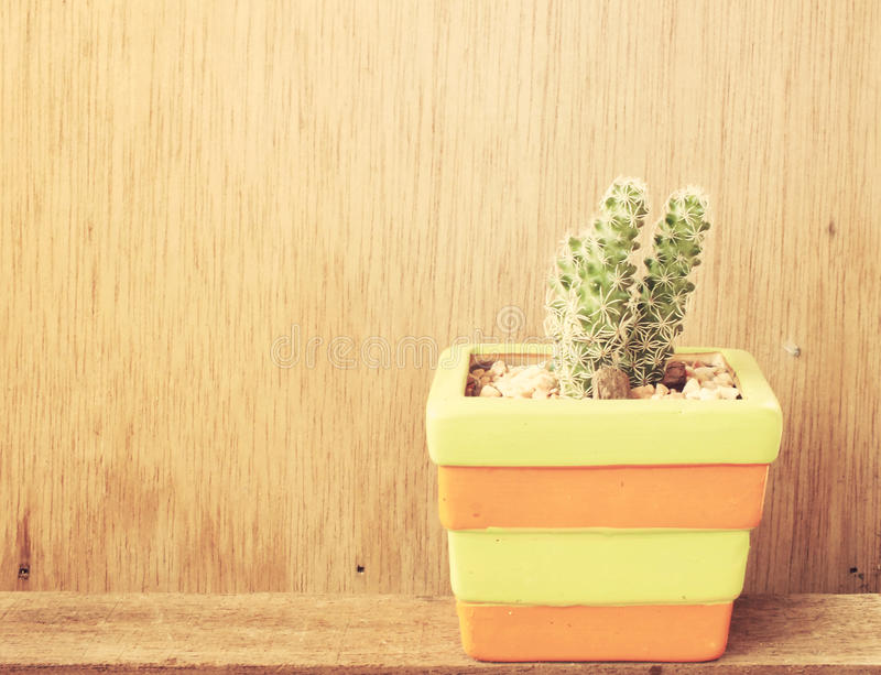 Colorful cactus in cut ceramic pot on wooden background vintage filter color. Colorful cactus in cut ceramic pot on wooden background vintage color tone stock images