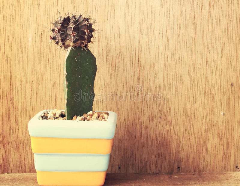 Colorful cactus in cut ceramic pot on wooden background vintage filter color. Colorful cactus in cut ceramic pot on wooden background vintage color tone stock photo