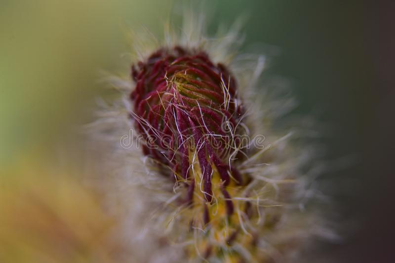Colorful cactus flower close up in my garden stock image