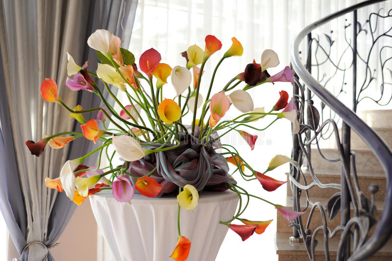 Colorful Callas Royalty Free Stock Photo