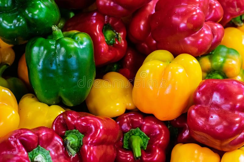 Colorful capsicum peppers stock photography