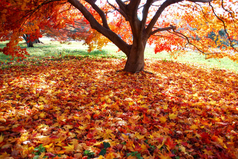 Download Colorful Carpet Of Fallen Leaves Stock Photo - Image: 17257206
