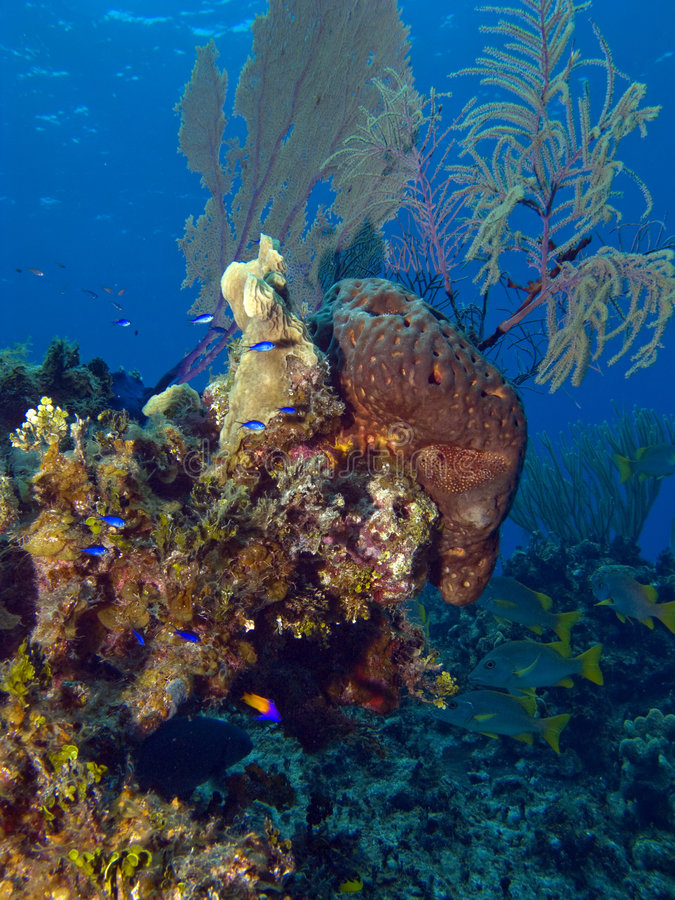 Colorful Cayman Brac Reef Scene. With Blue Fish royalty free stock photography