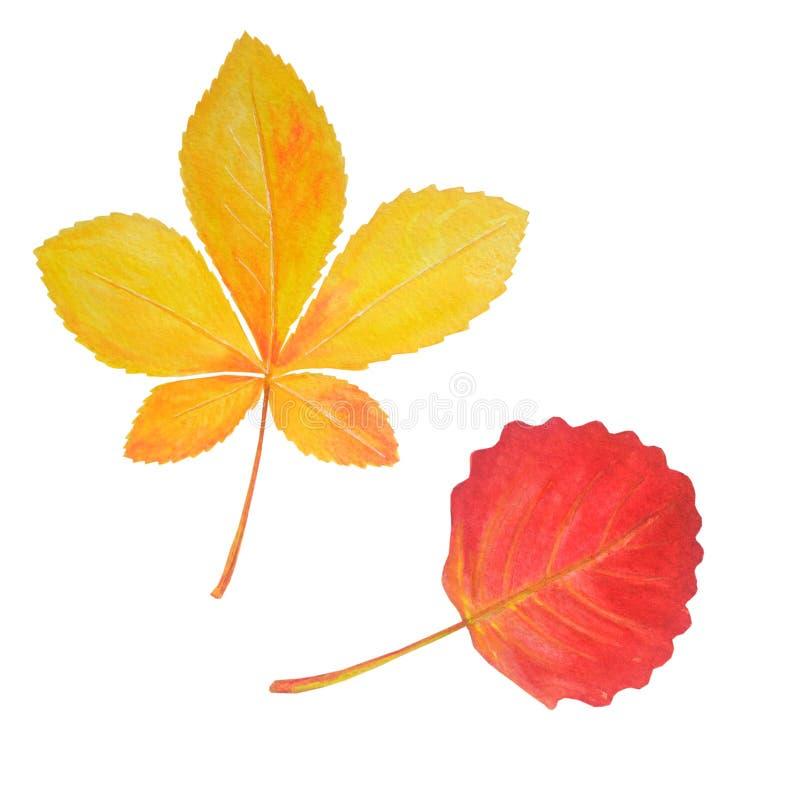 Bright chestnut and aspen leaves isolated on white. Colorful chestnut and aspen leaves in beautiful style isolated on white background. Botanical illustration vector illustration