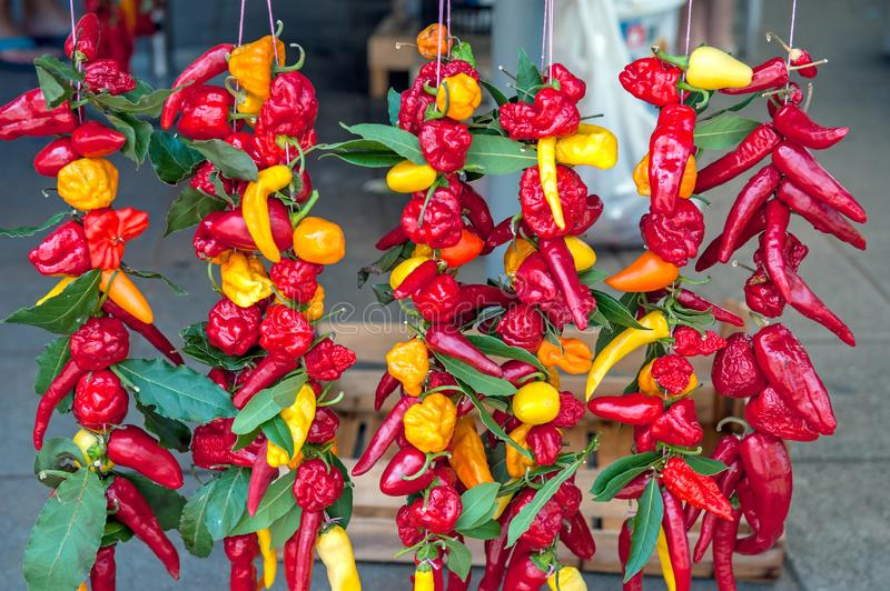 Colorful chili peppers and Bay leaves hang with cords in the window of the farmer`s market royalty free stock photos