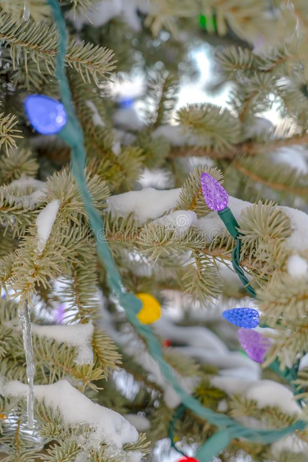 Colorful Christmas lights on snow covered tree. A string of colorful Christmas lights wrapped around a tree covered with snow. Winter views with details of a stock image