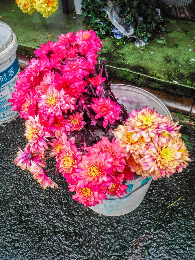 Colorful Chrysanthemum flower for making Indian Garland  in Little India Town. Colorful Chrysanthemum flower for making Indian Garland in a garland store in stock images