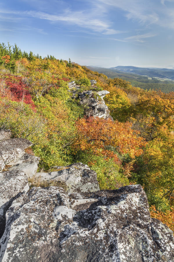 Colorful Cliff Edge. Fall foliage colors the cliff edge at Bear Rocks in the Dolly Sods Wilderness in the Allegheny Mountains of West Virginia royalty free stock image