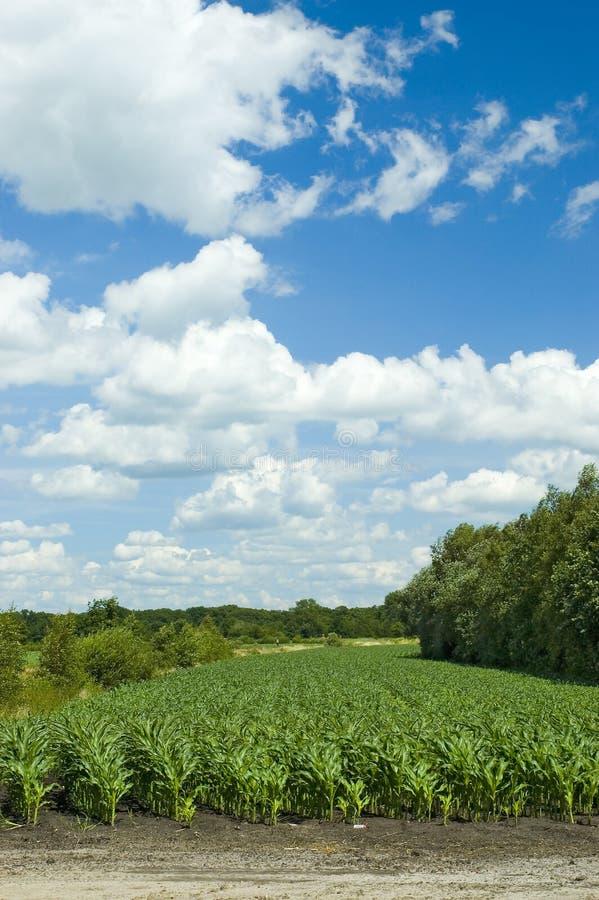 Free Colorful Cloudscape Corn Field Stock Photos - 2699663