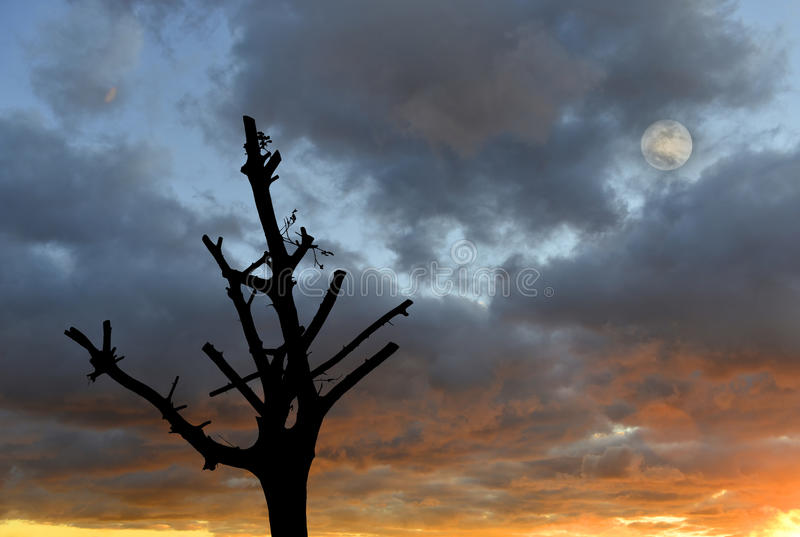 Colorful cloudscape, trimmed tree and full moon royalty free stock photography