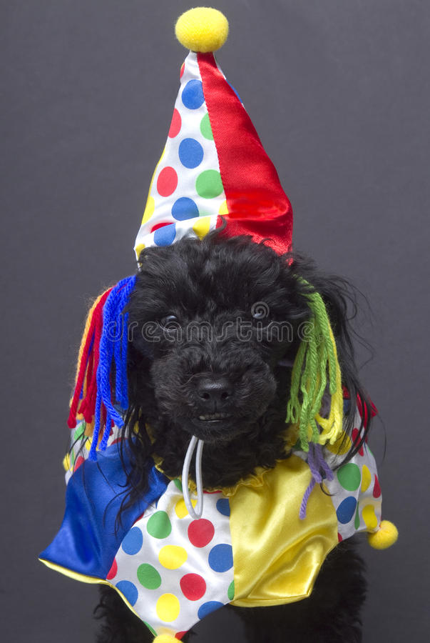 Download Colorful Clown stock image. Image of festive, celebration - 20330395