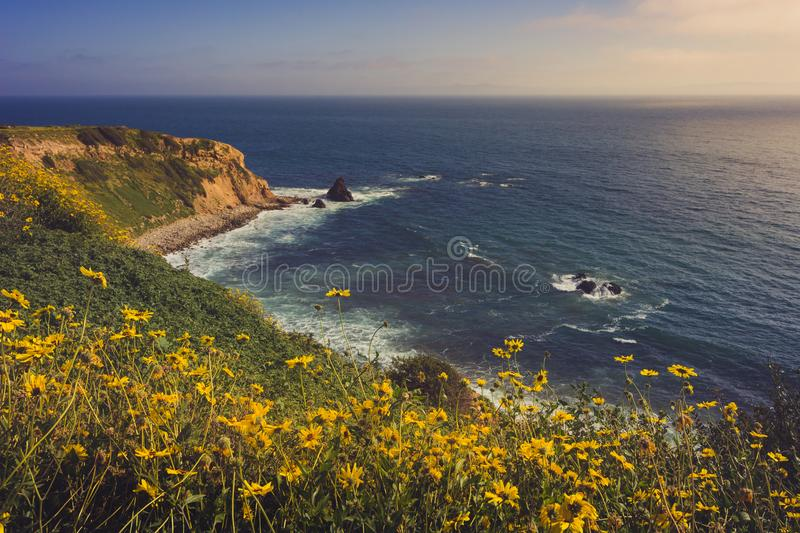 Rancho Palos Verdes Super Bloom. Colorful coastal view of the dramatic Pelican Cove cliffs covered with yellow wildflowers during the California Super Bloom of royalty free stock photo
