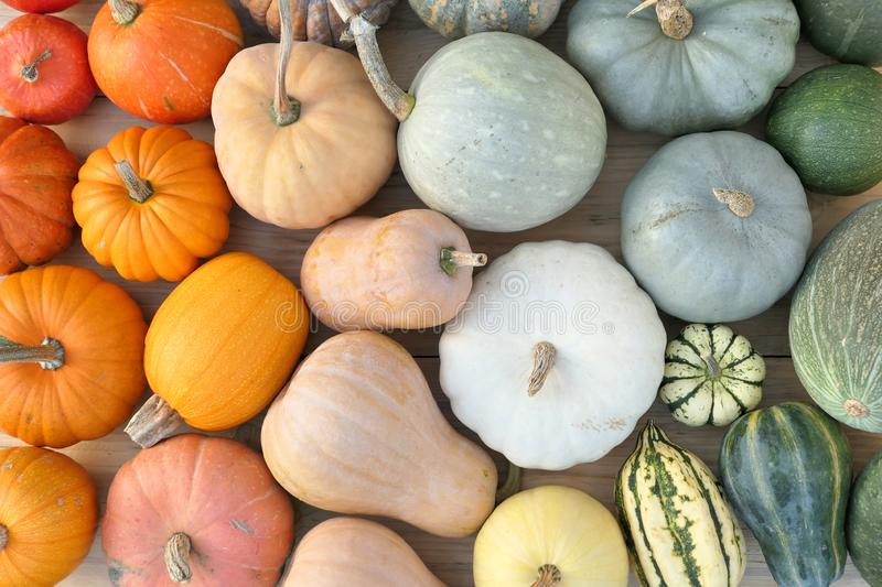Colorful collection of pumpkins and squashes. Autumn background stock photos